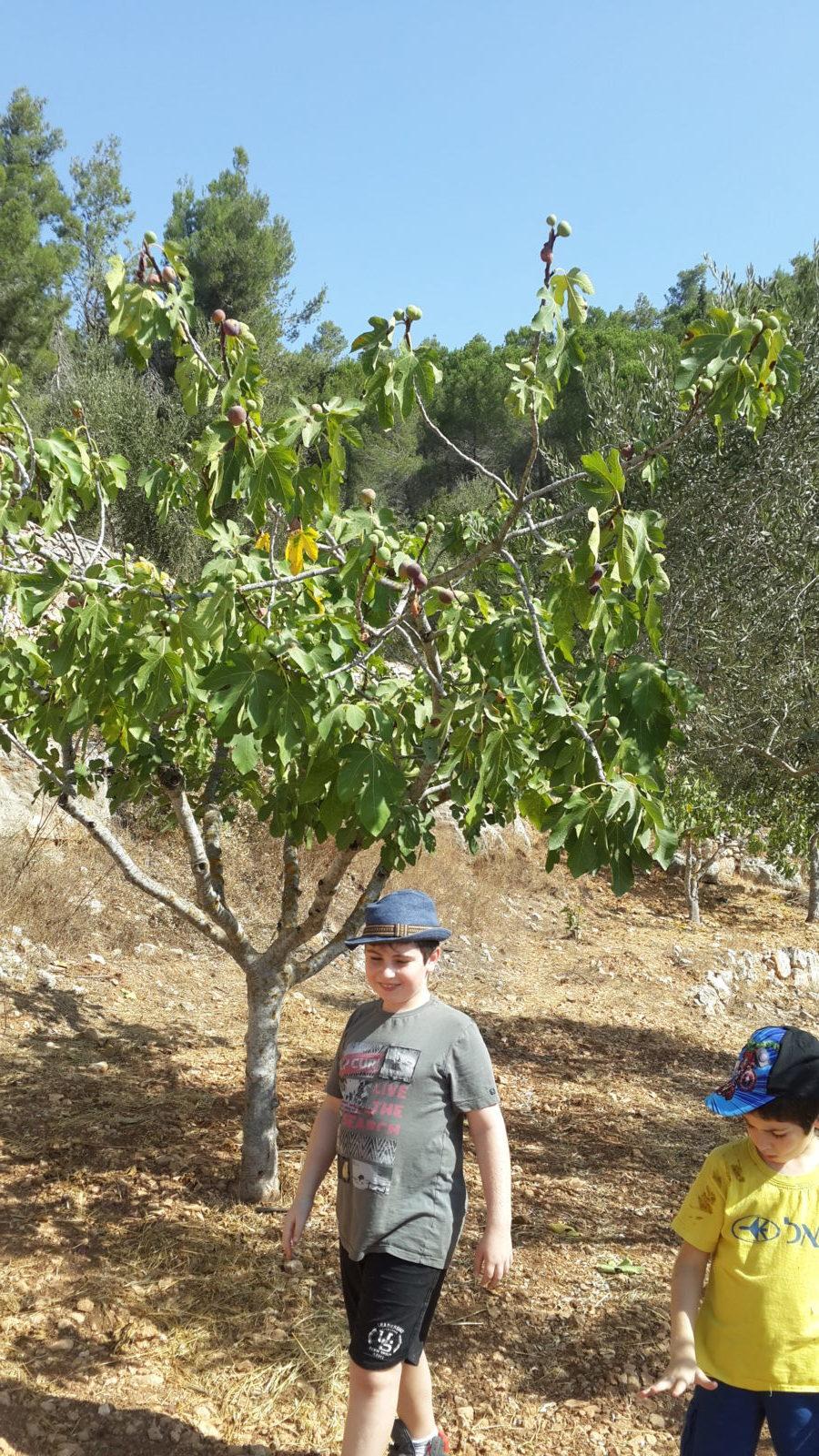 מרענן על יחורים וריבוי עצים – איך מקימים בוסתן עצי פרי מקומיים? – גינת בוסתן PK-87