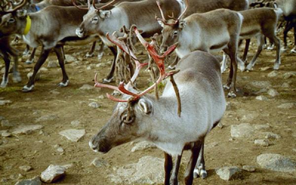 reind221