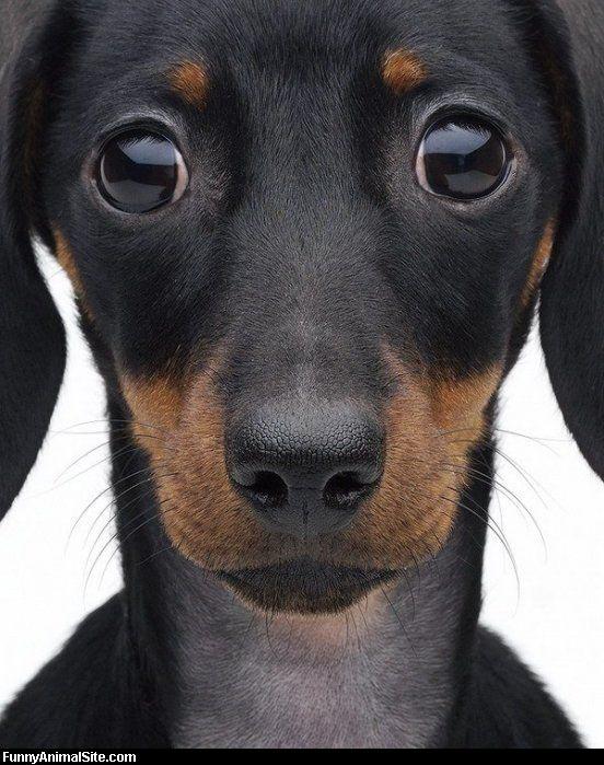 sad_puppy_eyes