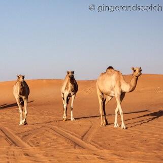 Adjusting to Expat Life in Dubai