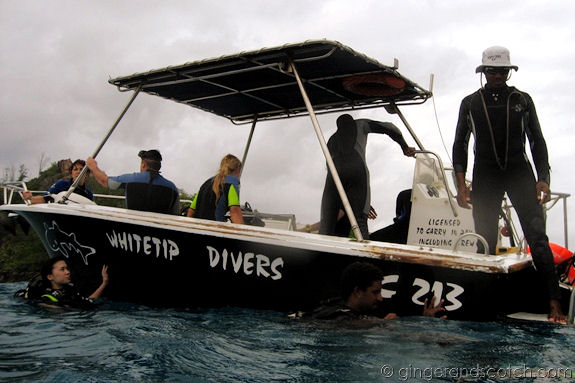 White Tip Divers