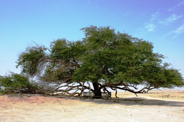 Bahrain Tree of Life