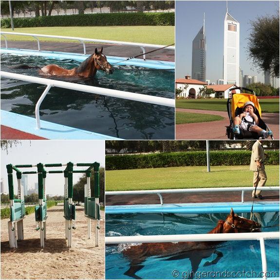 Equine Pool