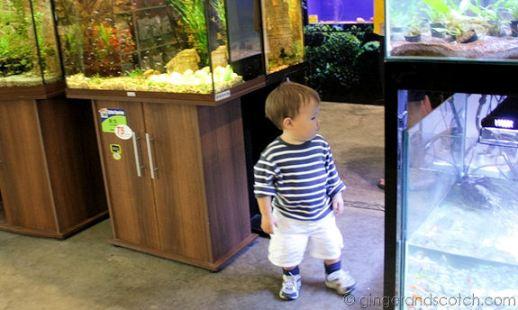 Dubai Garden Centre Aquarium