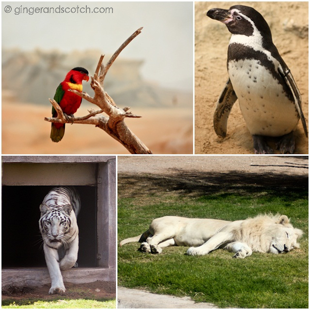 Al Ain Zoo - animals