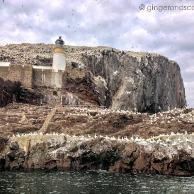 The Big White Rock – is it poop? Gannets?