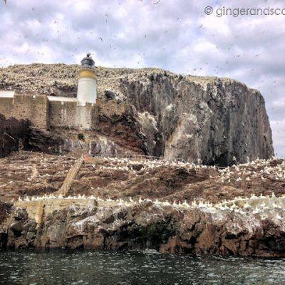 The Big White Rock – is it poop? Gannets?