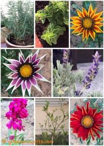 Garden Update: February 2016