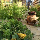 Volunteer Community Garden in Tecom, Dubai