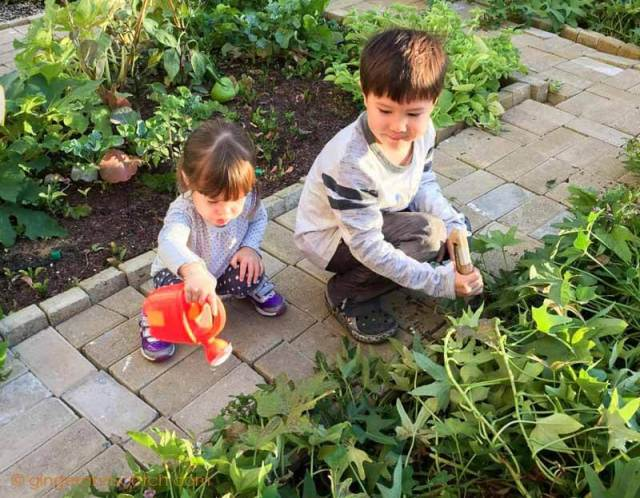 My kids helping to water the community garden