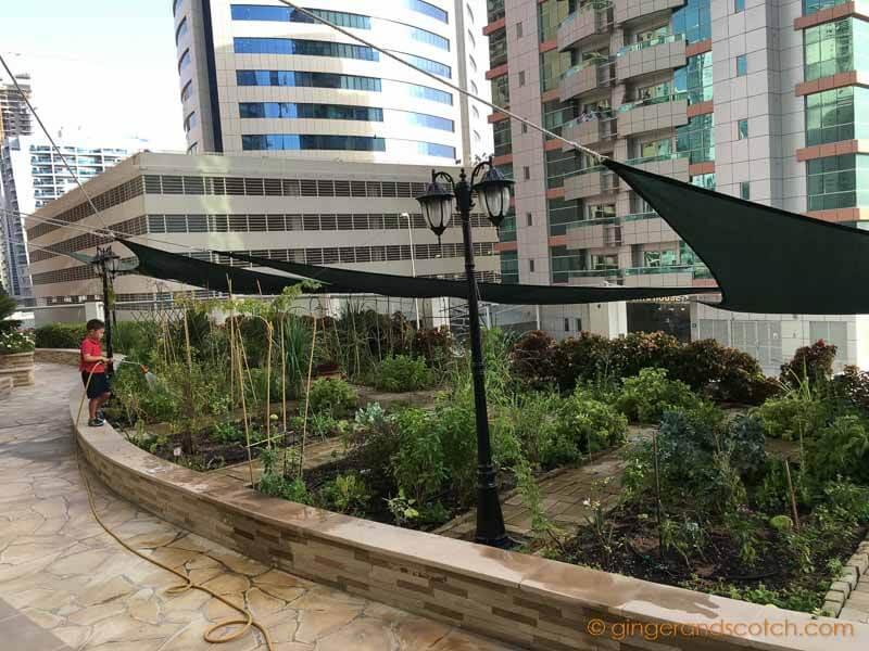 Urban Rooftop Garden Project (in Tecom, Dubai)