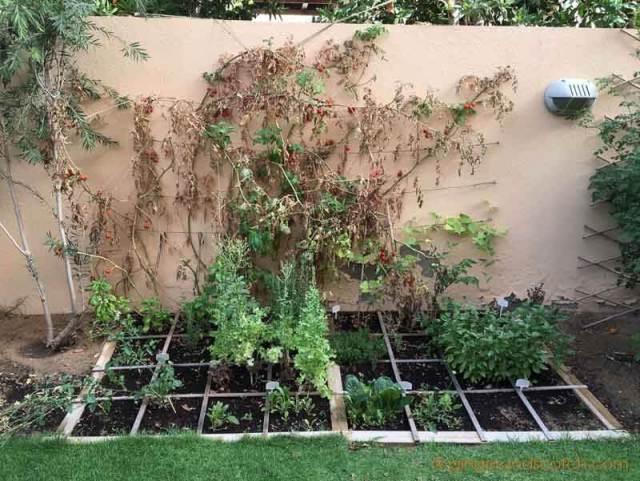 Dubai Garden May 2016