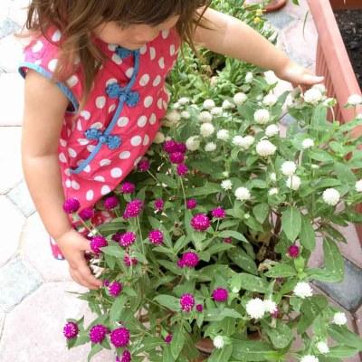 Preparing Our Garden for Summer (April / May 2016 garden update)