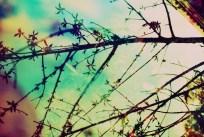 mind-tree