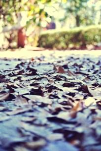flower-leaves