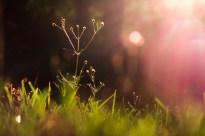 october-grass-1