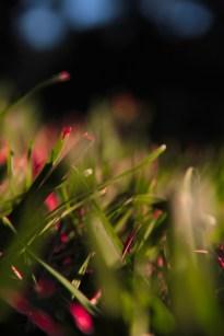 october-grass-4