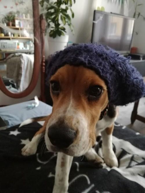 Nemo beagle