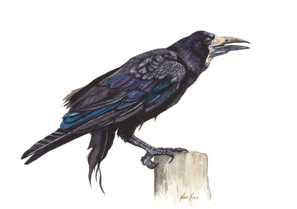 Watercolour Print of Rook Bird at Stonehenge