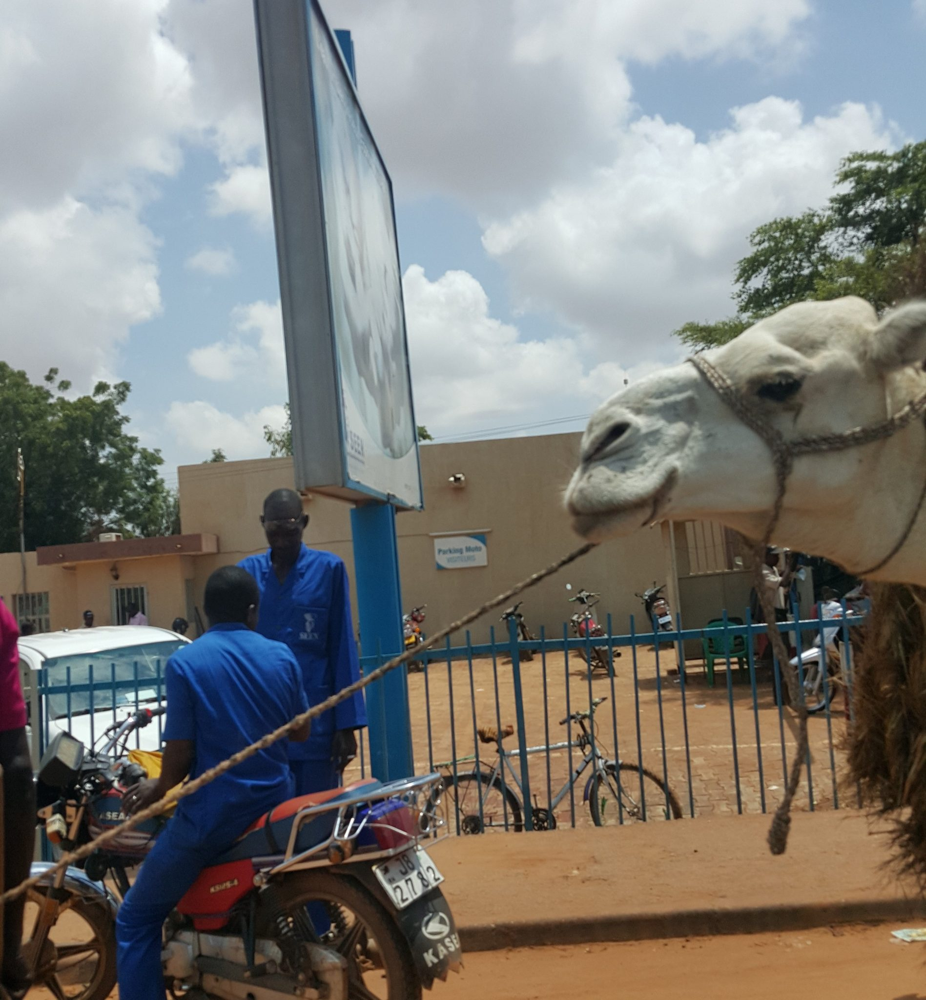 Camel on the street used to convey goods.
