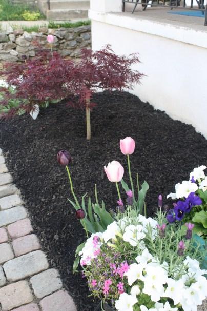 second round of tulips