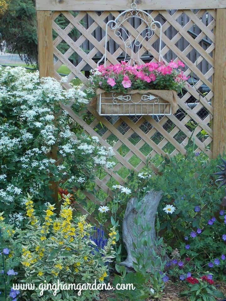 #silver lace vine #jolly bee geranium #veronica #alexanderloosestrife