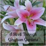 A Stroll Through Gingham Gardens