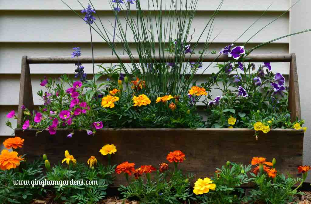 Creative Flower Container Gardening - Vintage tool box used as a flower planter.