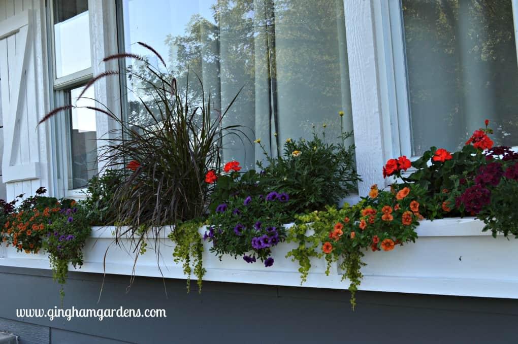 Window Box at Gingham Gardens