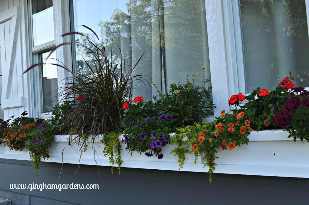 Gardening Recap - Window Box at Gingham Gardens