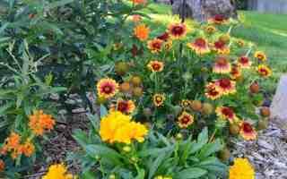Garden Tour – End of Summer