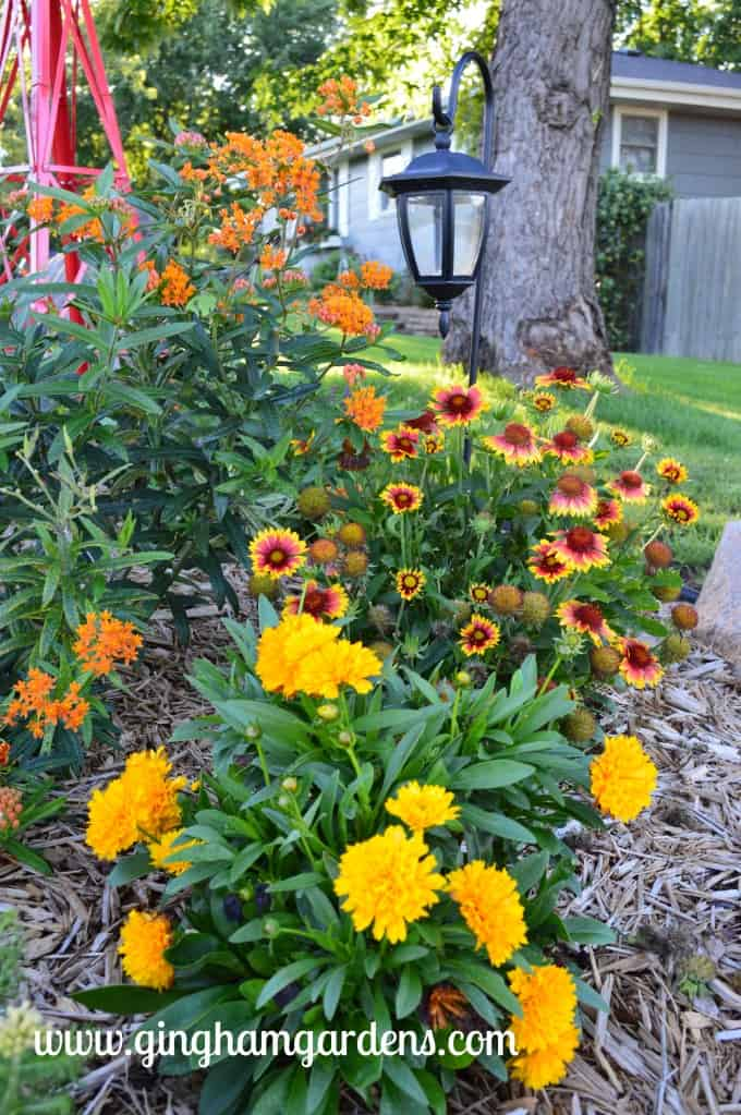 Garden Tour - Solanna Golden Sphere Coreopsis, Arizona Sun Gaillardia, Butterfly Bush