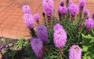 A Garden Visit – Munsinger Gardens