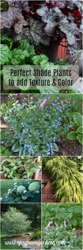 Perfect Shade Plants to add Texture & Color