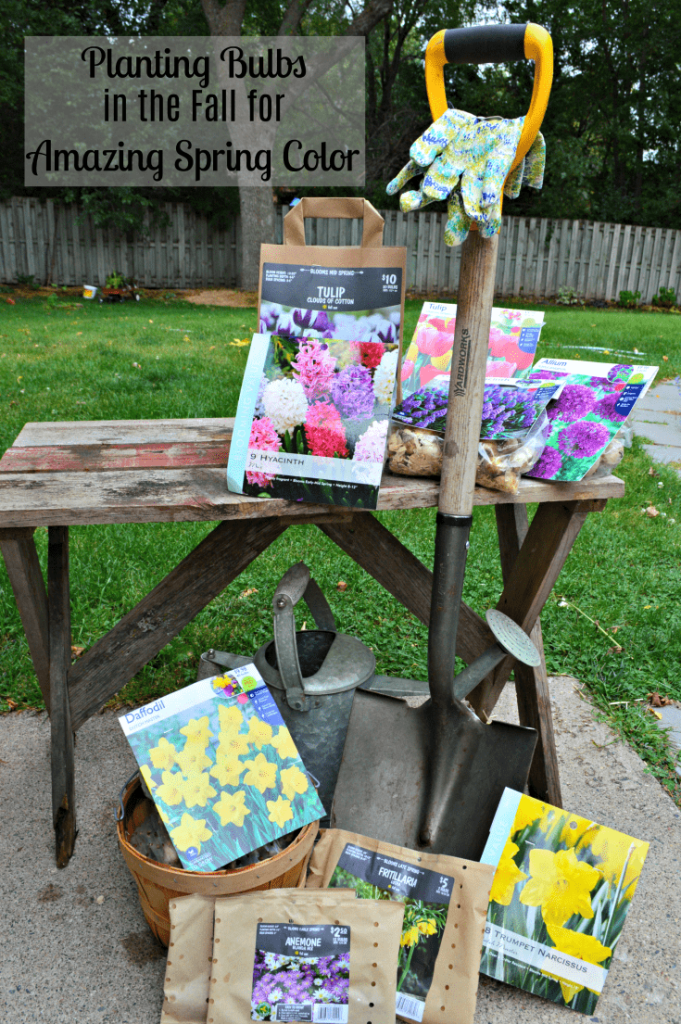 Fall Gardening - Bulbs to Plant for Amazing Spring Flowers
