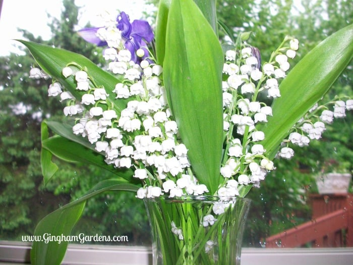 Cut Flower Bouquet - Lily of the Valley