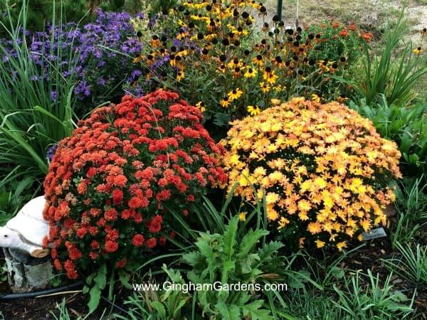 Fall Flower Garden Inspiration Plus Decor Ideas Gingham Gardens
