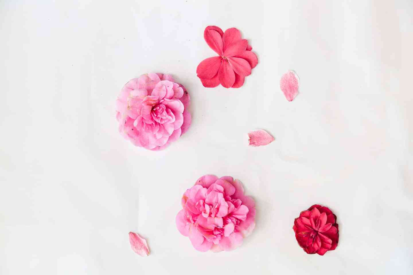Camellia flower heads and rhododendron petals for making petal art