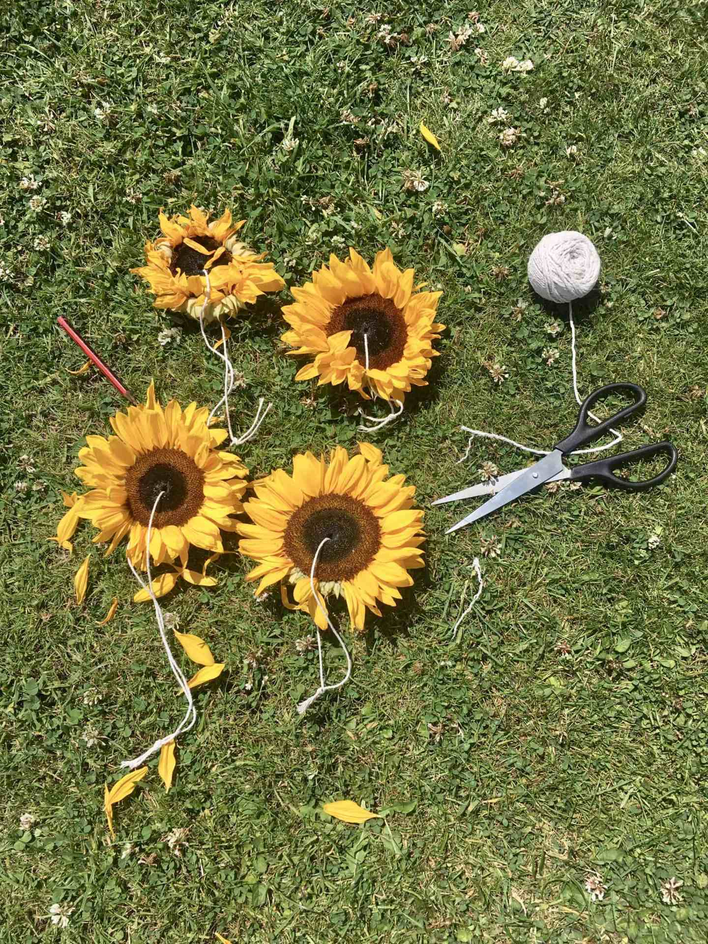 How To Make Sunflower Bird Feeders by GinGin & Roo