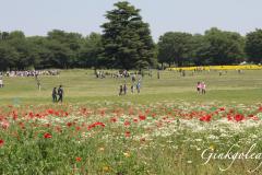Showa Kinen Koen Wiese mit Blumenfeldern