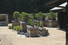 Bonsai Garten