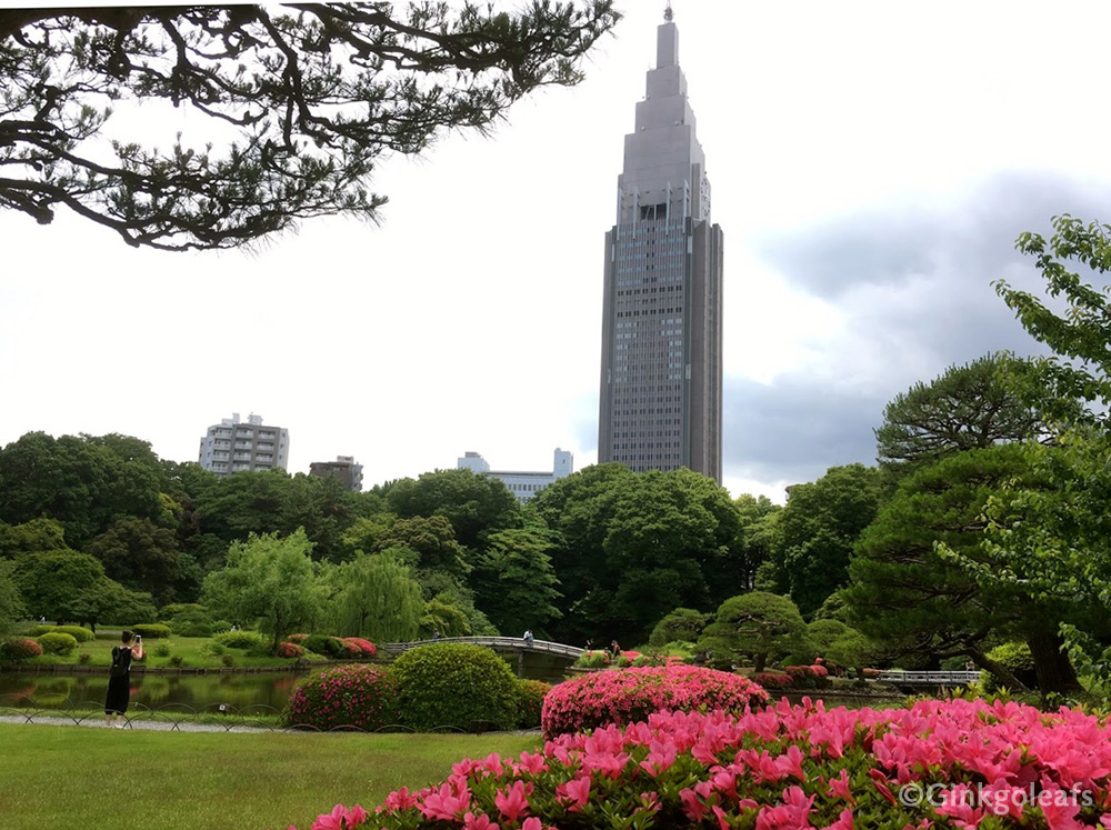 Shinjuku Gyoen with flowering azaleas