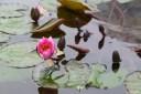 Yumenoshima Gewächshauser