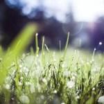 Sunlight over a grass field
