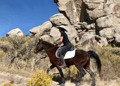 Update on My Senior Horse's Intermittent Diarrhea - Ginny's Horse