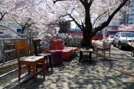 jinhae-cherry-blossom-festival-63