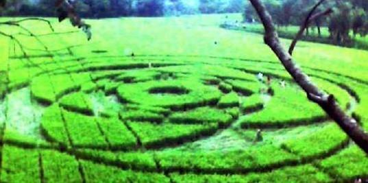 crop circle sleman yogya indonesia 2011 > The Art of Crop Circle (Pictures