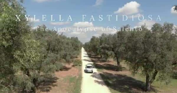 Apocalisse Xylella Il Docu Film Di Paola Ghislieri Sulla Tragedia Degli Ulivi Di Puglia Giornalemio It