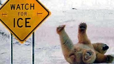 funny-polar-bear-pic-img121_edited