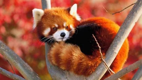 Firefox: disabilitare il controllo firme degli addon (se necessario) 3